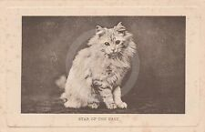 """CAT """"Star of the East"""" E Landor Wrench Series 592 Postcard"""