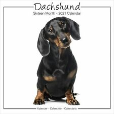 Dachshund Studio Calendar 2021 Premium Dog Breed Calendars