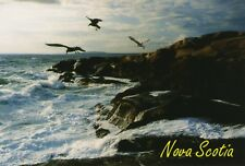 Nova Scotia Coastline Scene NS Birds Ocean Vintage Unused Postcard D15