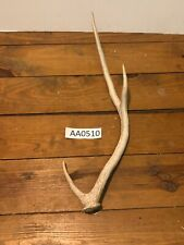 Axis Deer Shed Antler Hill Country Knife Handle Wildlife Ranch Exotic Aa0510