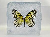 Ein echter Schmetterling (Malaysian Treenymph) in Kunstharz gegossen