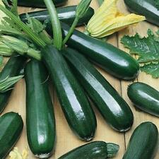 Squash, Zucchini Dark Green, 15 Vegetable Seed, Organic Heirloom NON-GMO, USA