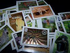 EDEKA WWF Tierbilder Sammelbilder 10 Sticker