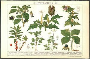 POISON PLANTS 1890 vintage original Chromolithograph print