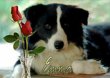 PERSONALISED BORDER COLLIE SHEEPDOG BIRTHDAY ANY OCCASION CARD Illus Insert