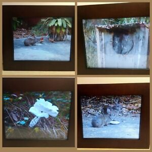 NEW Smartparts SP15MW 15-Inch Digital Picture Frame with Walnut Frame
