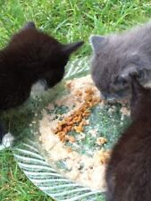 FREYA'S FERAL CAT HEALTH RECIPE HELPS FEED COLONY CATS RESCUE NONPROFIT 7 Pages