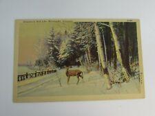 Vintage Postcard Deer Winter Wisconsin Wild Life Rhinelander 30806