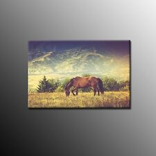 Large Art Oil Painting Canvas Print Picture Wall Art Animals Horse No Frame