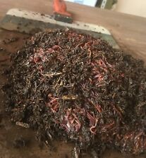 Red Wiggler Worms -3 lbs. Live Composting Worms for Home Worm Bin