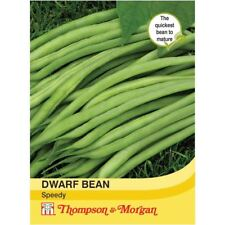 Thompson & Morgan-Hortalizas-Dwarf Bean rápida - 75 Semillas