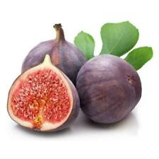 100 Pcs Ruby Figs Seed Seeds Fruit Vegetables Flower Planting Home Plant 20 S8Z7