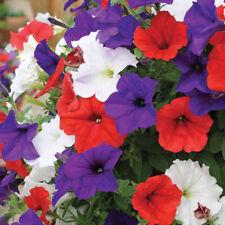 Seeds Petunia Unique Mix Flower Climbing Hanging Perennial Garden Organic Ukrain