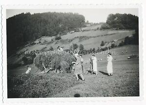 Schönau im Schwarzwald 1938 - Heuernte Bauern - Schönes altes Foto 1930er