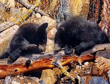 Jigsaw Puzzle Animal Wild Black Bear Cubs 1000 pieces NEW