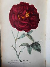 1824 TREATISE ON FLOWERS by HOGG - PLATES - CARNATION PINK, TULIP ROSE, HYACINTH