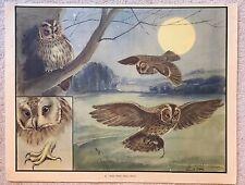 Eileen Soper Enid Blyton 1950s Original School Print No.30 Who Owl Night