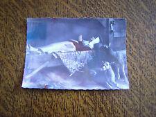 carte postale pelerinage de sainte-germaine de pibrac (haute-garonne)
