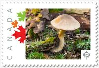 MUSHROOM  Personalized Postage stamp MNH Canada 2018 [p18-05sn16]