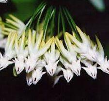 Loam Partial Shade Spring Light Plants, Seeds & Bulbs
