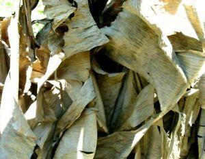BIG Pieces Dried Banana Leaves Pet Supplies Care Fish Aquariums 100% BIO Leaf