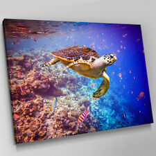 A445 Ocean Coral Reef Sea Turtle Canvas Wall Art Animal Picture Large Print