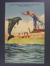 Miami Florida Fl Seaquarium Porpoise Dolphin Vintage Linen Postcard 1940s Vtg