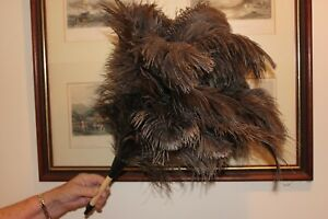 One natural grey  ostrich feather duster first grade plain wood handle 37-42cm