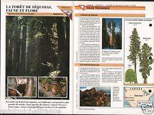 Faune Flore Côte Forêt Sequoia Géant Ecureuil Chickaree Geai Wapiti FICHE FRANCE