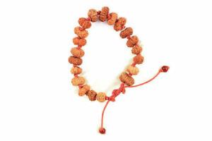 14 Mukhi Rudraksha Bracelet / Maha Bali Hanuman Bracelet / 20 Beads Java Origin