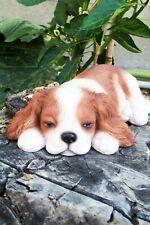 1935 Antique Cavalier King Charles Spaniel Print Wardle Dog Pet Print Cfw 4270p