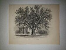 Washington Elm Cambridge Massachusetts 1861 Hw Sketch Print Rare!