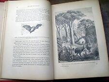 Brongniart, Charles - Histoire naturelle. L'homme et les animaux, par Charles Br