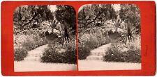 Cannes.Jardin du Chateau,Villa Vallombrosa.St Ursule.Photo Stereo Albuminée.