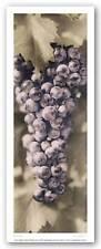 Pinot Noir Alan Blaustein Art Print 5x14