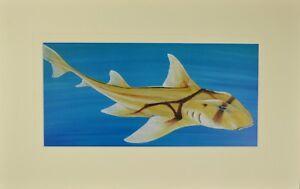 "Port Jackson Matted Print 12"" x 19"" , Australian Marine Animals"