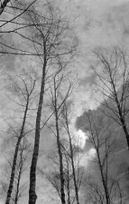 negativ-Natur-Bäume-Wolken-stillleben
