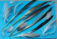 SALE!!  NATURAL FEATHERS x 50 FREE FALLEN SEAGULL+ PIGEON , grey, white feathers