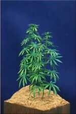 1/35 Scale Greenline Hemp Plants Cannabis Plants - laser cut paper plants
