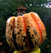 15 CARNIVAL SQUASH Winter Cucurbita Pepo Seeds *Comb SH