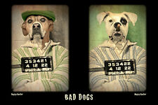 Large Giclee Photograph BOXER Bad Dogs in Jail PRISON Outfit VINTAGE MUGSHOTS