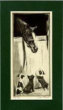 Boston, Fox, Scottish Terrier Pups & Horse Diana Thorne Genuine Vintage 1935