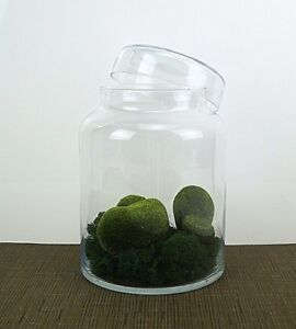 Handmade Clear Glass 21 cm terrarium vase with lid container jar sweet biscuit