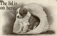 CARTE POSTALE POST CARD FANTAISIE DOG CHIEN THE LID IS ON HERE