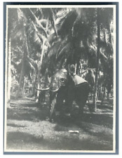 Ceylan, Riding an elephant on the road to Kandy  Vintage silver print Tirage a