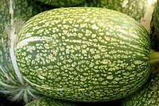 Feigenblattkürbis - Cucurbita ficifolia - 5+ Samen - ERTRAGREICH und HALTBAR!
