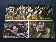 PHILLIP ISLAND PENGUIN PARADE SEAL ROCK NEAR NOBBIES KOALA AND YOUNG POSTCARD
