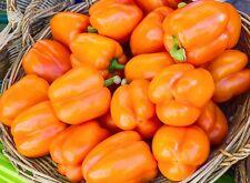 100 ORANGE KING BELL PEPPER Sweet Capsicum Annuum Vegetable Seeds *Comb SH &Gift
