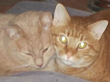 Sponsor Butterball-A Rescued SCOOP Cat for 1 Month-Receive His Story and Picture