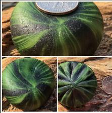 Davenport Surf-tumbled Sea Glass - Deep Green Onion Round Flower Santa Cruz